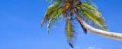 palme-und-strand