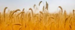 anbau-landwirtschaft