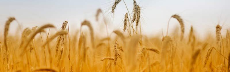 landwirtschaft-anbau