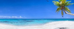 strand-palme-meer