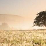 Rätselhafte Fälle von Gewitter-Asthma