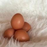 Studie: Eier kein besonderes Risiko für die Gesundheit